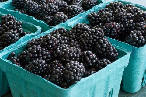 Roseborough Black Berries Credit: Dwight Sipler