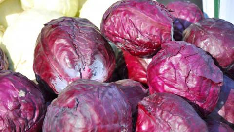Cabbage, Mammoth Red Rock