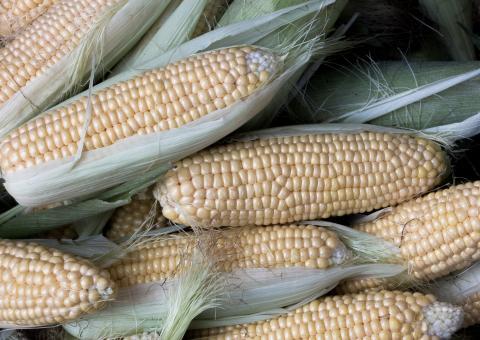 Corn, Elote Blanco Corn