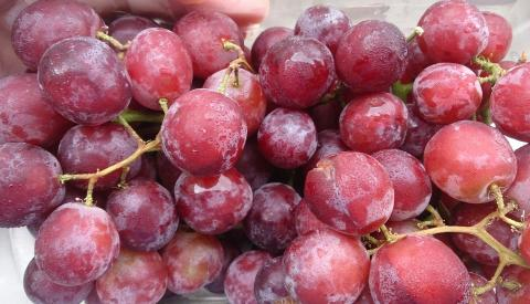 Ruby Seedless Grape