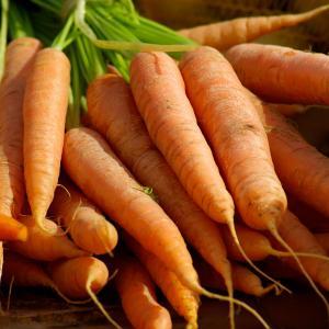 Standard Carrots