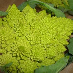 Cauliflower, Heirloom Cauliflower