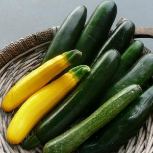 Zucchini- immature